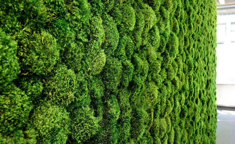 GREEN MOOD Mur végétal Murs végétaux Murs & Plafonds  |