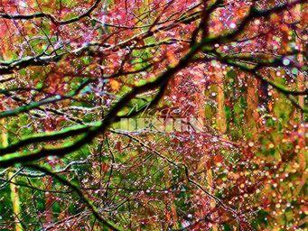 Magel'design - �clats de feuilles 120x120 cm , 3d effet relief - Tableau Contemporain