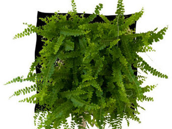 WALLFLOWER - poche � planter fougix wallflower - Tableau V�g�tal