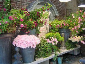 Arzinc -  - Pot De Fleur