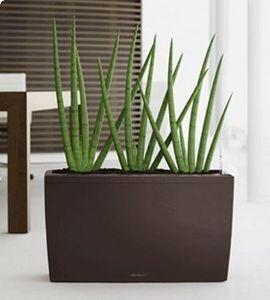 DESIGNER PLANTERS - lechuza cararo - Bac À Fleurs