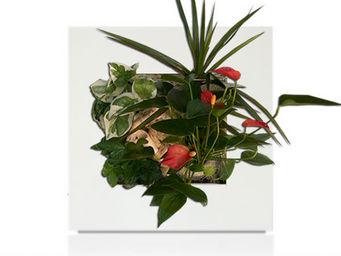 WALLFLOWER - tableau végétal hawaii wallflower small blanc - Tableau Végétal