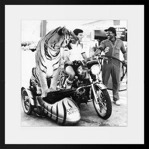 PHOTOBAY - tiger in a side car - Photographie