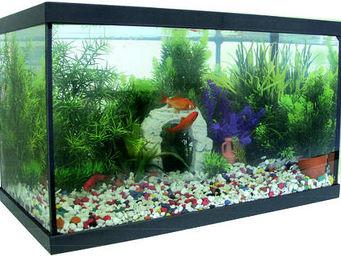 AGROBIOTHERS - kit aquarium en verre 20 litres - Aquarium