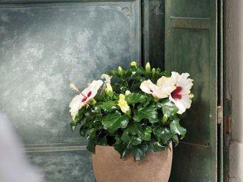 DEROMA France - pietrabruna - Pot De Fleur