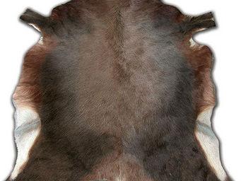 Tergus - peau de blesbok naturel - Peau De Bête