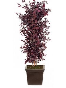 Element Vegetal - eucalyptus rouge - Plante Stabilisée