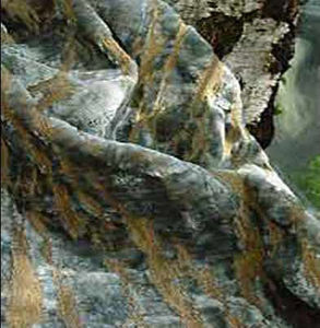 Sabina Fay Braxton -  - Tissu D'ameublement