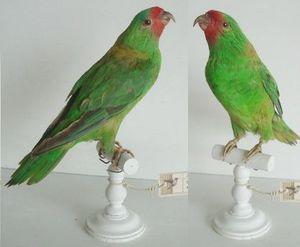 The Little Museum Shop -  - Animal Naturalis�