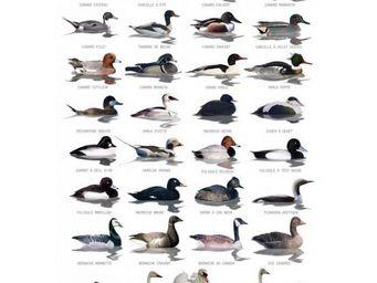 OCEANS ET JARDINS  O&J - carte postale oiseaux aquatiques - Poster