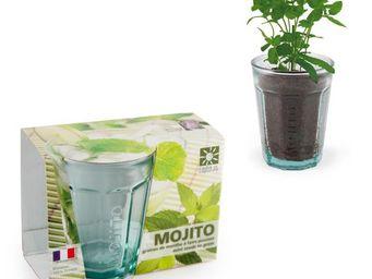 Radis Et Capucine - graines de menthe et verre � facette pour mojito r - Potager D'int�rieur