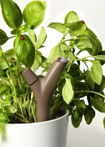 PARROT - Capteur pour plantes-PARROT---Flower