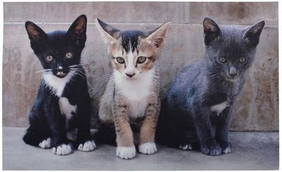 Esschert Design - Paillasson-Esschert Design-Tapis en caoutchouc recyclé motif chats
