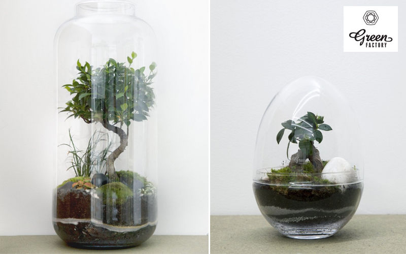 GREEN FACTORY Terrarium Garden under glass Trees & plants Flowers and Fragrances  |