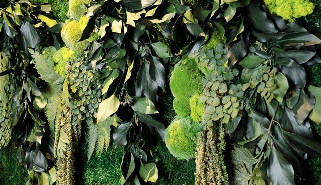 MOSS TREND Vegetal wall Vegetal walls Walls & Ceilings  |