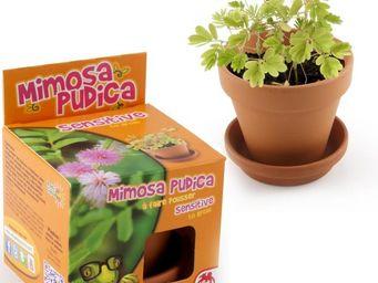 Radis Et Capucine - la surprenante sensitive à semer dans son pot de t - Interior Garden