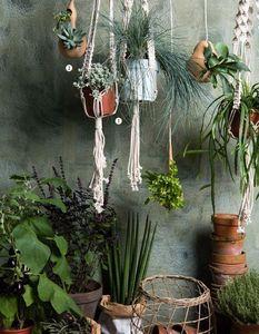 RESCUED! -  - Hanging Basket