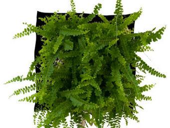 WALLFLOWER - poche à planter fougix wallflower - Organic Artwork