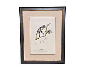 Demeure et Jardin - gravure guenon - Engraving