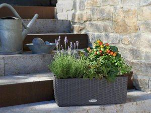 LECHUZA -  - Flower Box