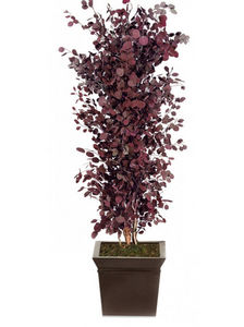 Element Vegetal - eucalyptus rouge - Preserved Plant