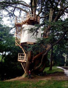DANS MON ARBRE -  - Treehouse