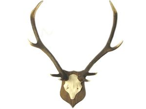 Abbeyhorn -  - Wall Mounted Antler