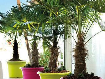 DEROMA France - cilindro farnese framboise maxxi fun - Garden Pot