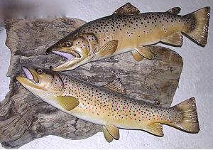 cap vert - truite fario - Fishing Trophy