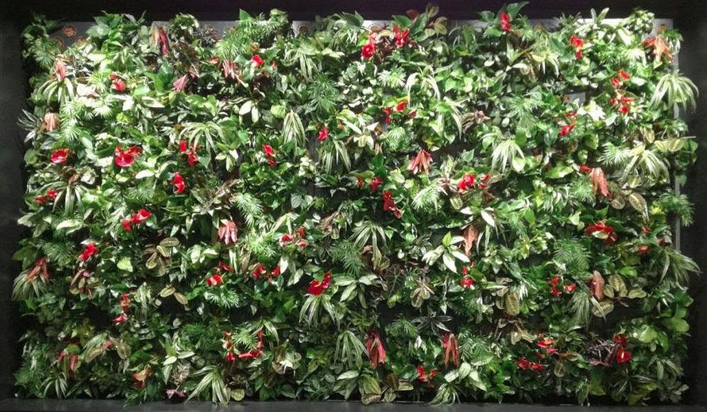 ORTISGREEN Bepflanzte Wand Bäume und Pflanzen Blumen & Düfte  |