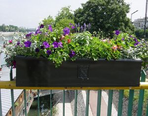 Larbaletier -  - Balkonkasten