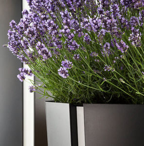 Flora - octa - Blumenkübel