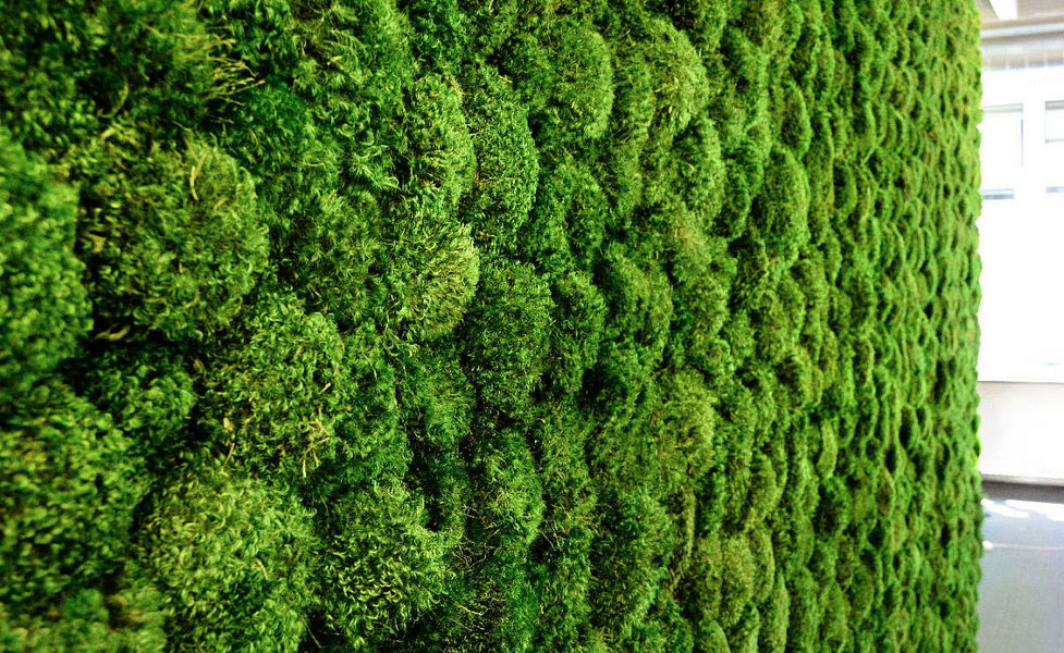 GREEN MOOD Muro vegetal Muros vegetales Paredes & Techos  |