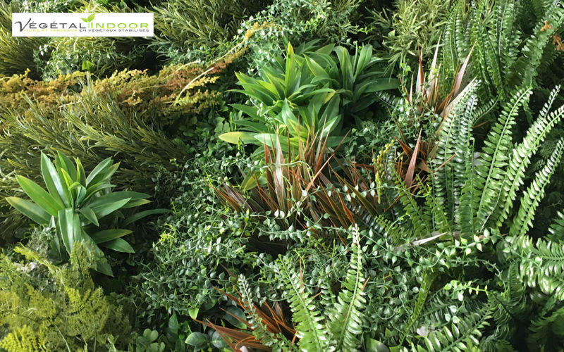 Vegetal  Indoor Muro vegetal Muros vegetales Paredes & Techos  |
