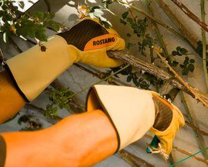 Rostaing - roncier - Guante De Jardín