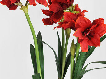 NestyHome - amaryllis - Flor Artificial