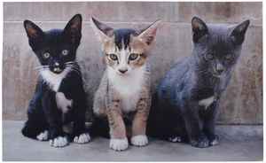 Esschert Design - tapis en caoutchouc recyclé motif chats - Felpudo