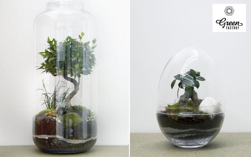 GREEN FACTORY  Alberi e piante Fiori e Profumi  |