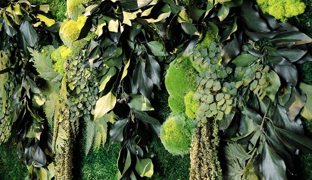MOSS TREND Muro vegetale Muri vegetali Pareti & Soffitti  |