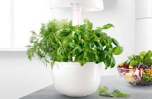 Bosch - smartgrow 3 - Giardino Per Interni Collegato