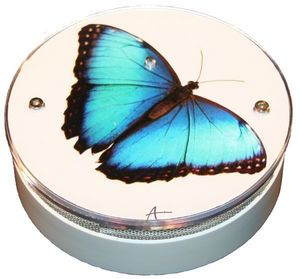 AVISSUR - papillon bleu - Allarme Fumo
