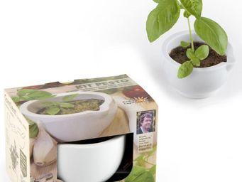 Radis Et Capucine - graines de pesto avec pilon céramique - Giardino Per Interni