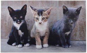 Esschert Design - tapis en caoutchouc recyclé motif chats - Zerbino