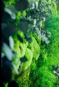 GREENAREA -  - Muro Vegetale